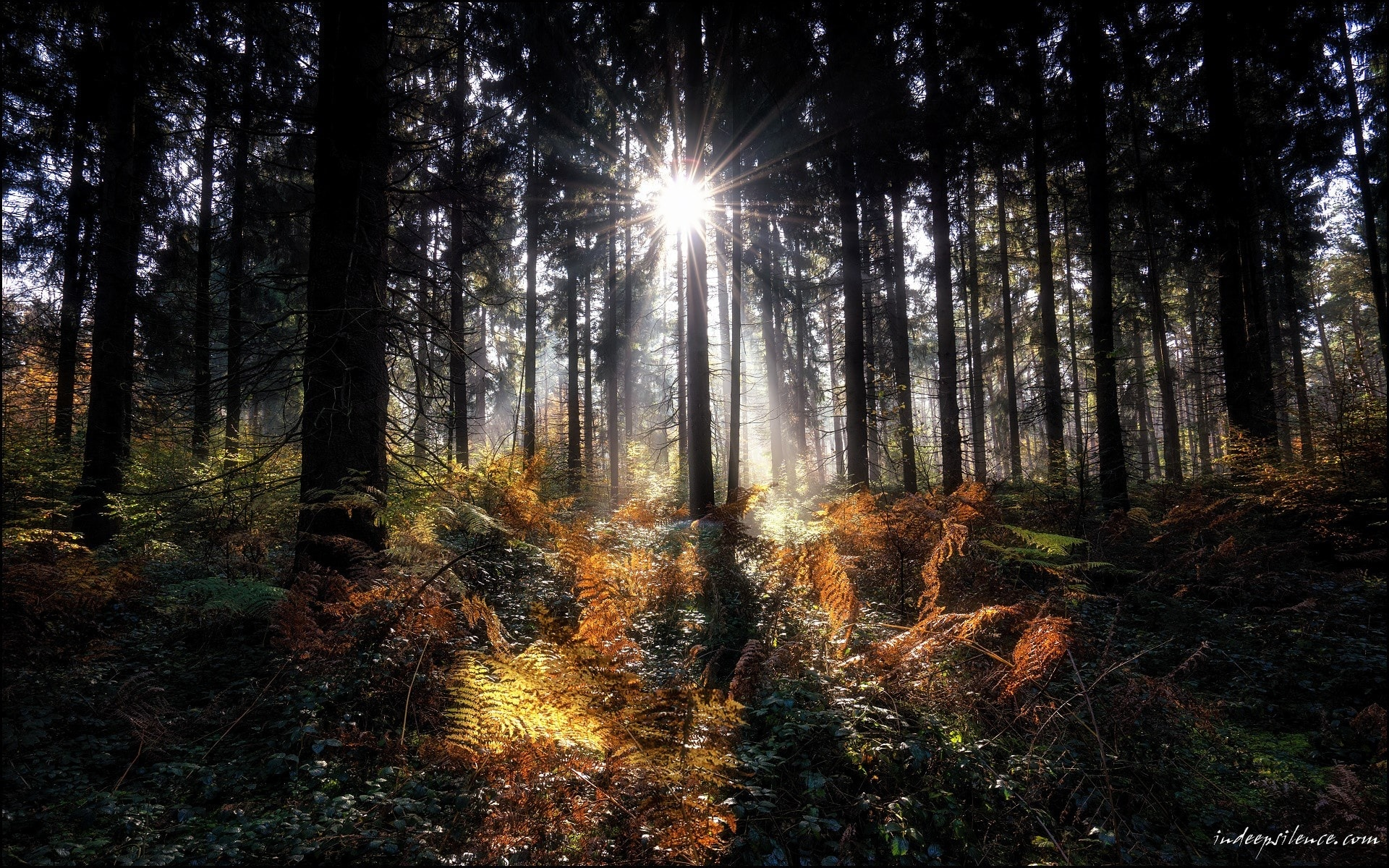 Into The Forest – Indeepsilence